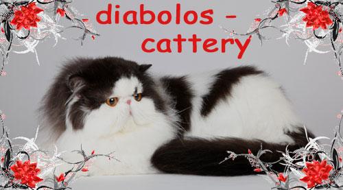 An den Beitrag angehängtes Bild: http://www.diabolos-perser.de/banner/diabolos-mutze.jpg