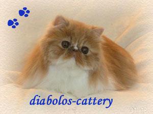 An den Beitrag angehängtes Bild: http://www.diabolos-perser.de/banner/diabolos6.jpg